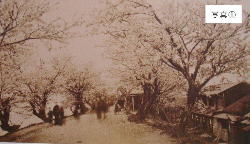 墨堤の桜並木''